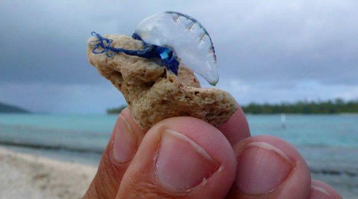 На пляжах Таиланда появились ядовитые медузы
