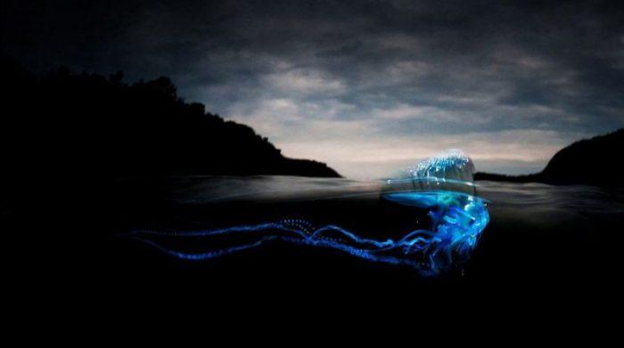 Медузы больше не страшны: пляжи Пхукета снова открыты для отдыхающих