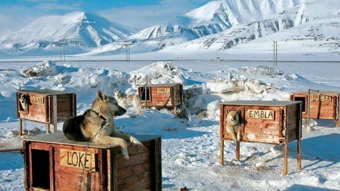 Туры в Арктику появятся для россиян через несколько лет