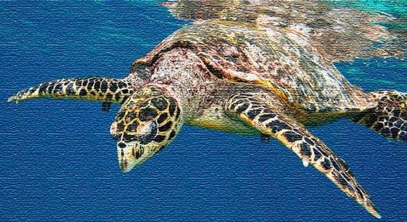 Достопримечательности и природа Сейшельских островов