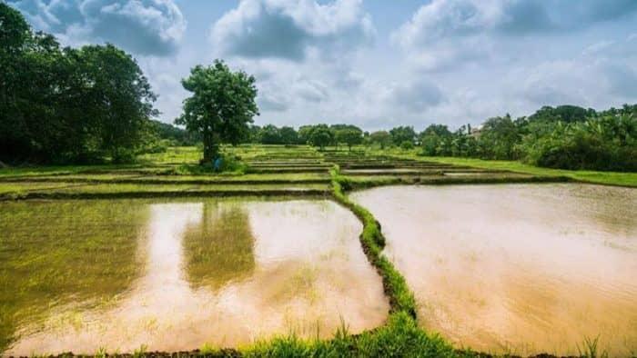 Индия будет привлекать путешественников во время сезона муссонов
