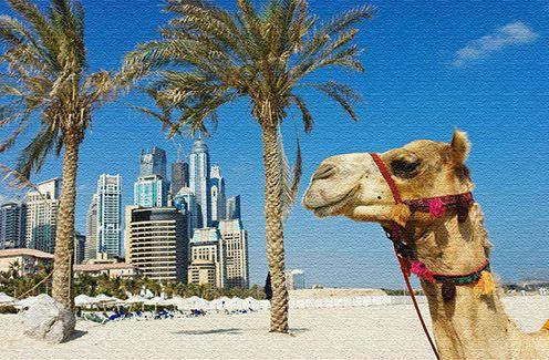 Развлечения, как провести время в ОАЭ
