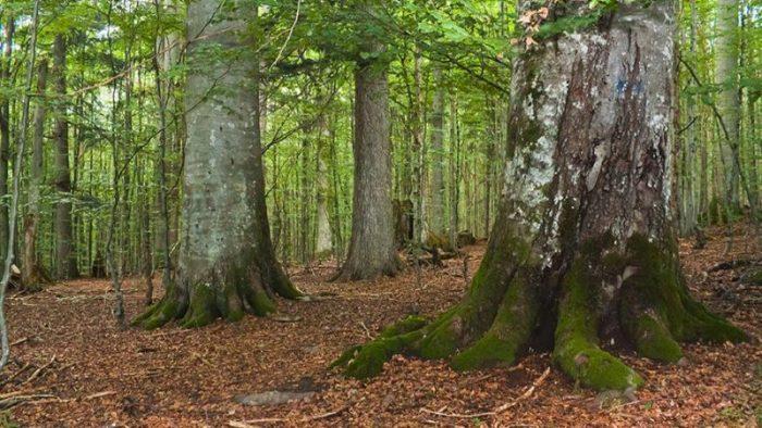 Два природных объекта Албании попали под защиту ЮНЕСКО