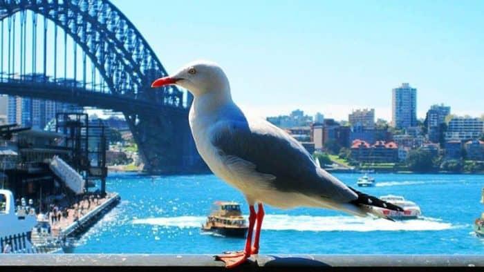 Сидней один из лучших городов на планете по мнению туристов из США