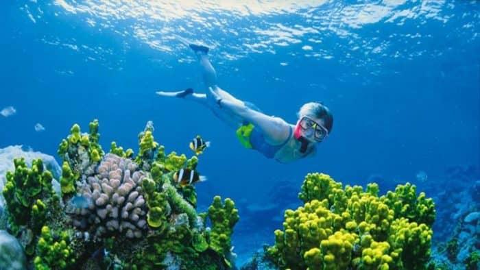 Новые правила безопасности для дайверов на Большом Барьерном рифе