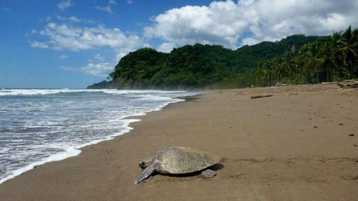 Черепашьи волонтеры в Коста-Рике - полезный отдых на побережье