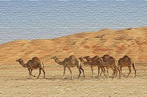 Экологический туризм в Саудовской Аравии