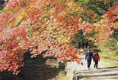 Экологический туризм в Южной Корее