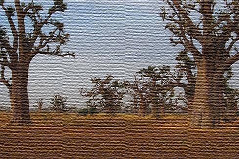 Экологический туризм в Сенегале