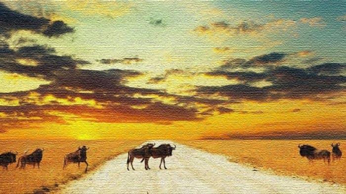 Курорты Намибии: пейзажи пустыни Намиб и Атлантического океана (фото)
