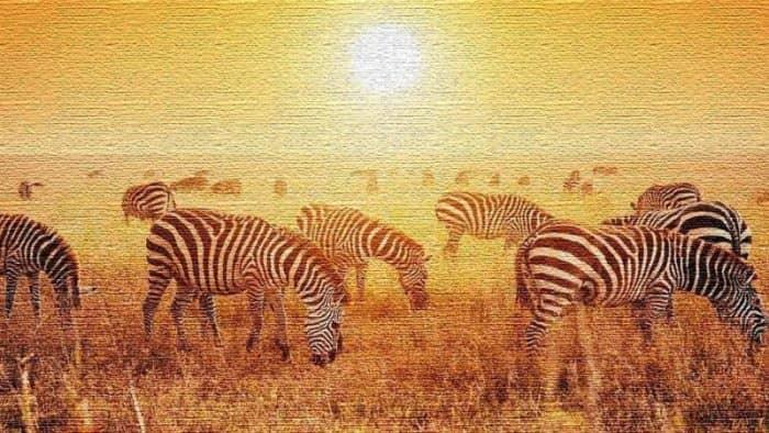 Курорты Танзании: популярное туристическое направление в Африке