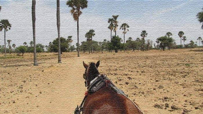 Курорты Сенегал - бытность Африки и экзотические развлечения