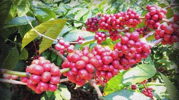 В штате Карнатака продвигают туризм на кофейные плантации
