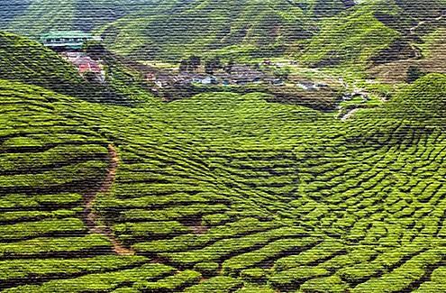 Экологический туризм в Малайзии (фото)