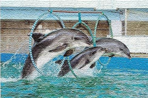Евпаторийский Дельфинарий (фото)