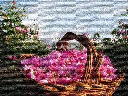 Фестиваль Розы - культурная традиция болгар (фото)