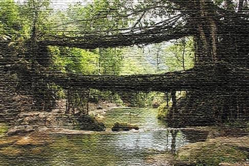 Мост живых корней, Черрапунджи
