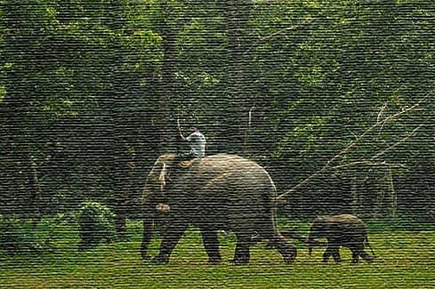 Национальный парк Читван, Непал (фото)