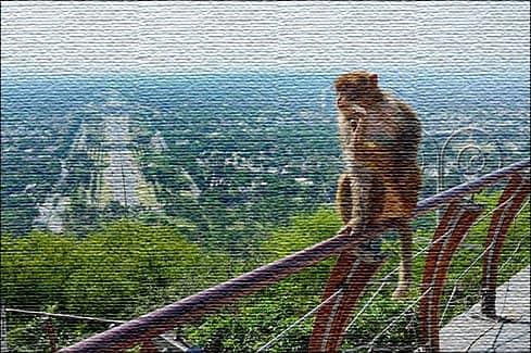 Отзывы туристов о посещении Пакистана (фото)