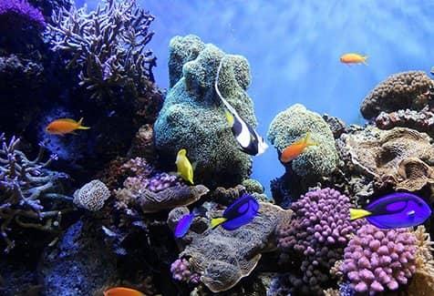 Насладитесь красотой голубого рифа (фото)