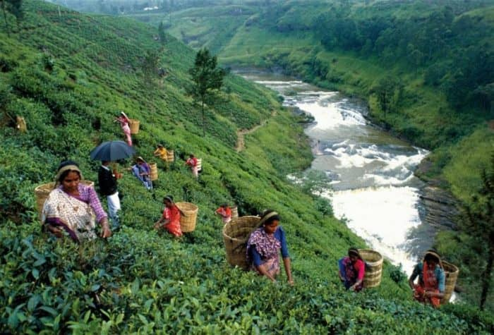 Когда ехать на Шри-Ланку? Достопримечательности острова