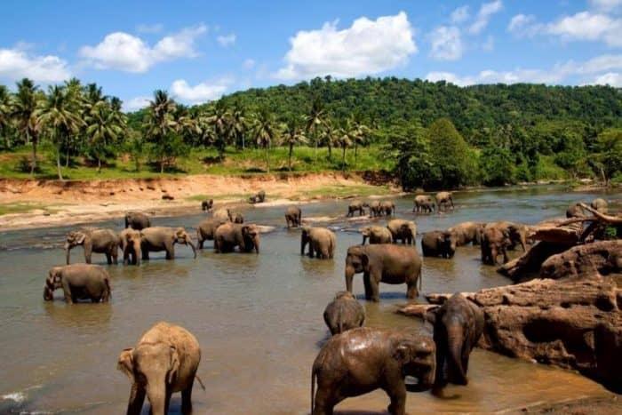 Слоны на острове