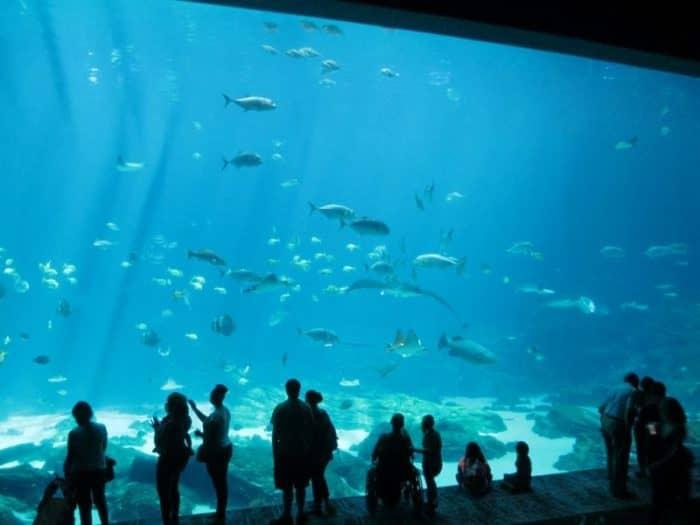 Аквариум двух океанов