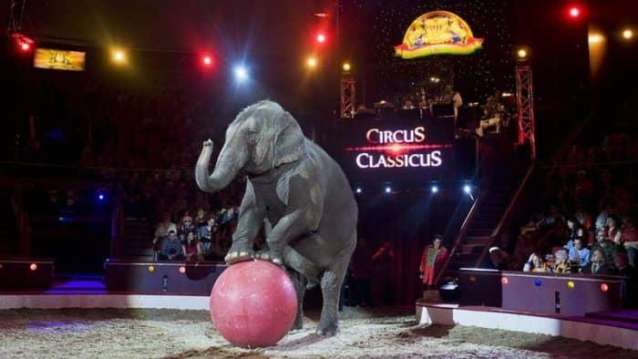 Большой цирк