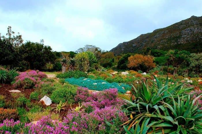 Ботанический сад Кейптаун