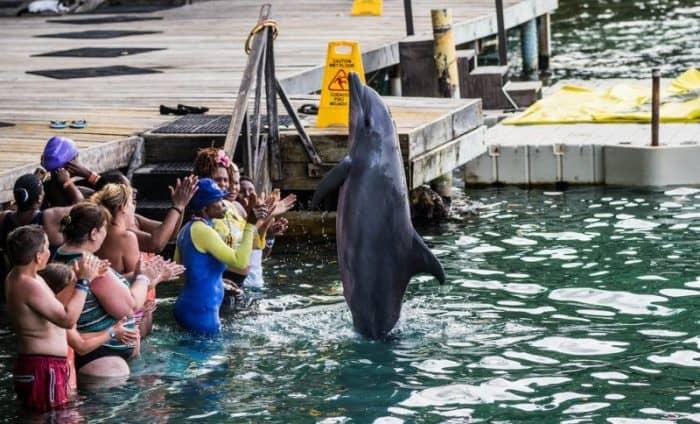 Бухта дельфинов