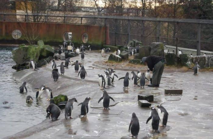 Эдинбургский зоопарк