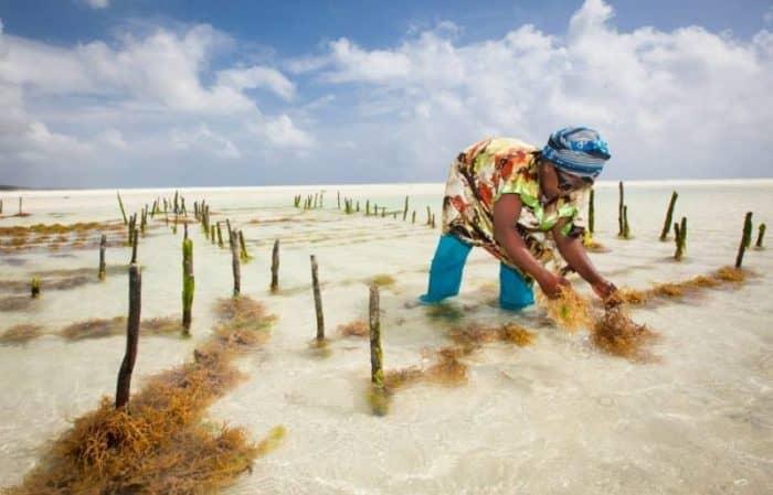 ферма морских водорослей