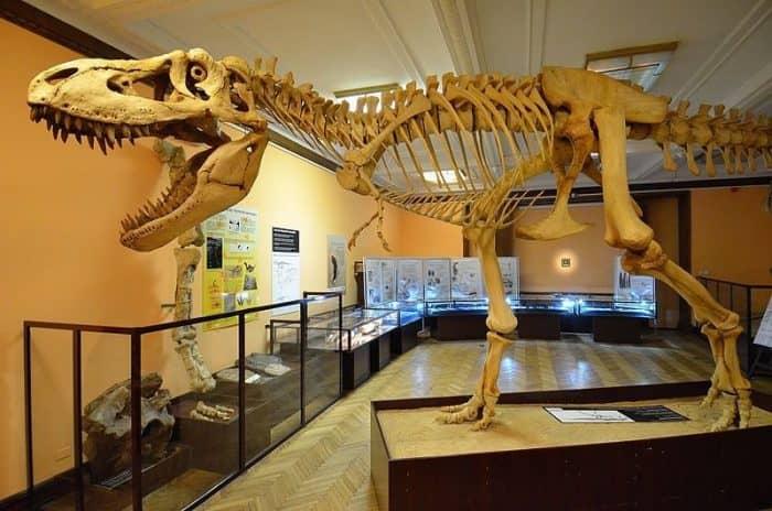 Музей кукольных домиков и Музей Эволюции
