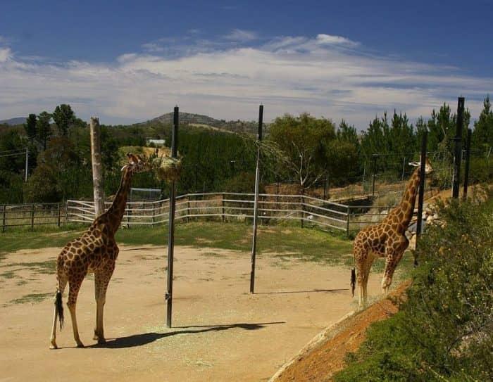 Национальный зоопарк и аквариум2