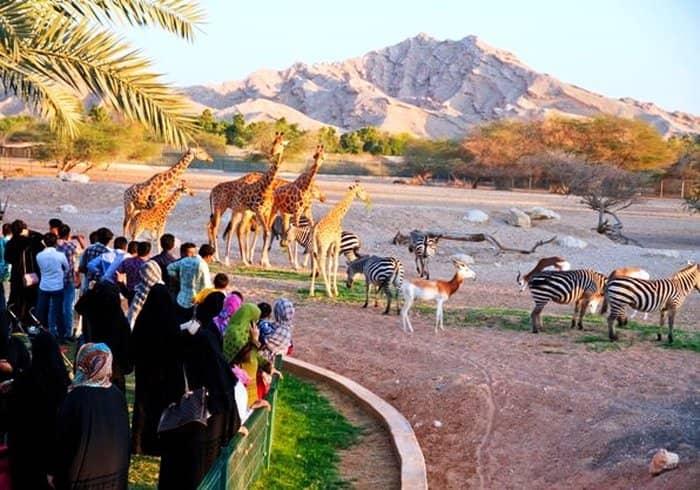 Зоопарк Абу-Даби