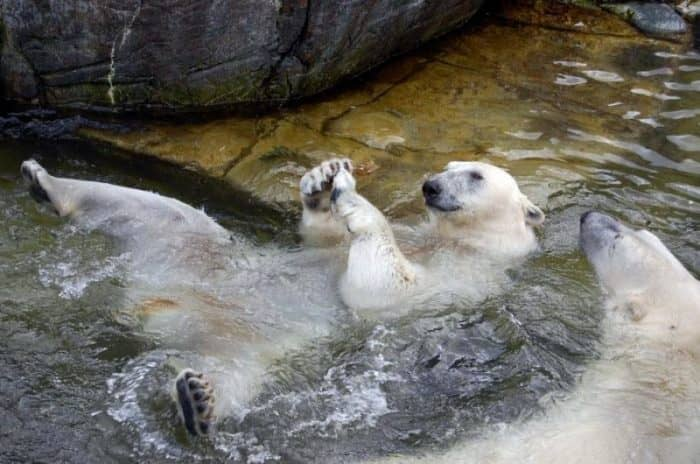 Зоопарк Копенгагена