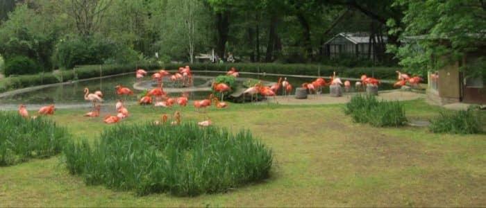 Дрезденский зоопарк