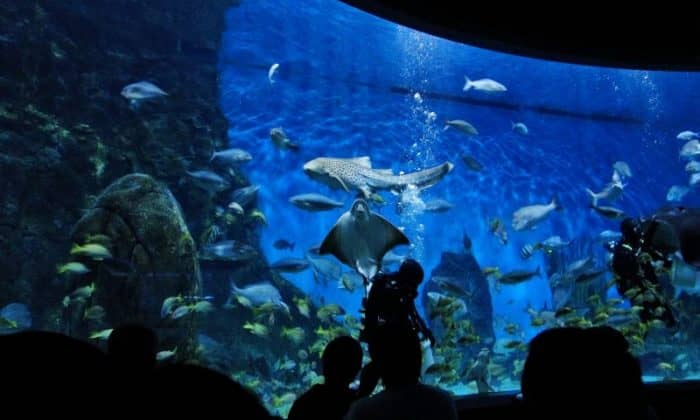 Мельбурнском аквариуме