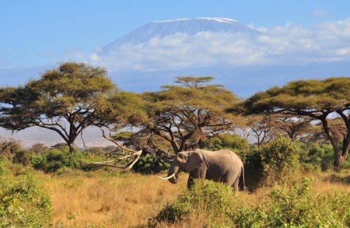 Найроби тур